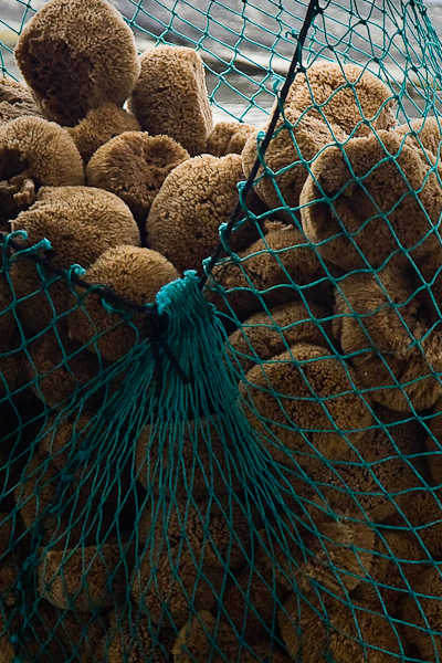 Natural sea sponges harvested by divers, from the Tarpon Springs sponge beds.