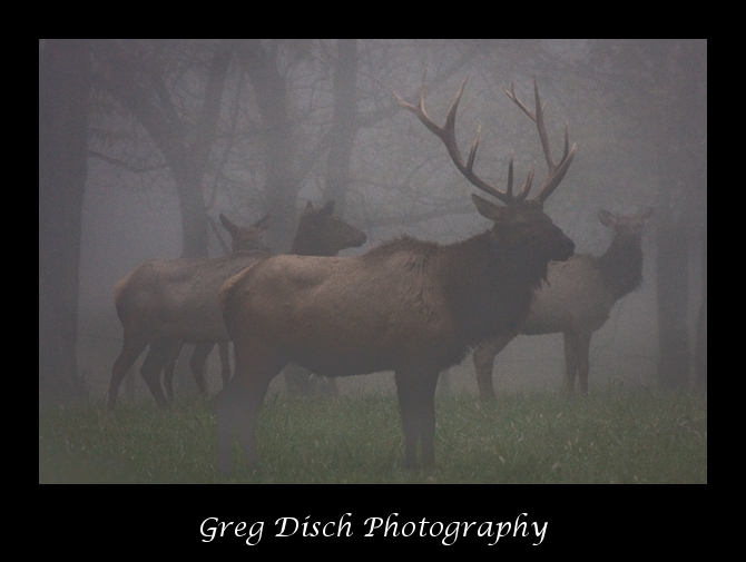 Boxley Valley Elk 1