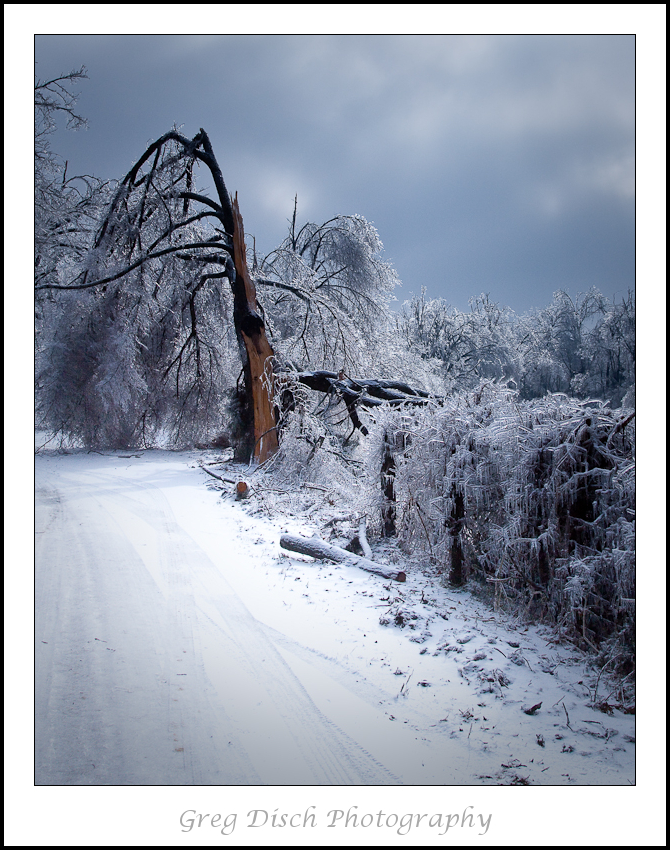 A major ice storm hit northwest Arkansas on January 26 & 27. Many areas had 80-90 percent of households without power and it could take 2 days to a week or more to restore power.  The ice was up to 1  1/2 inches thick and snapped trees like they were toothpicks, sounding like gunfire to heavy artillery as branches and entire trees continued to fall.  This photo was taken on a rural highway near Beaver Lake. Although this is a terrible disaster there is still beauty to be seen from the ice.  Giclee Fine Art  Gallery Wrap Canvas Print