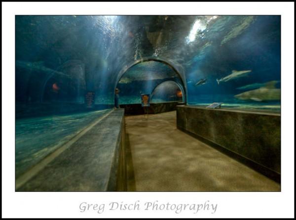 Oklahoma Aquarium - Greg Disch Photography