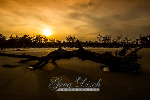 Driftwood Beach Jekyll Island Georgia 20140218-_MG_3013