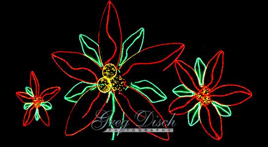 Holiday Lights - Garvan Woodland Gardens20131203-_MG_9932